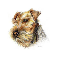 TS Welsh Terrier